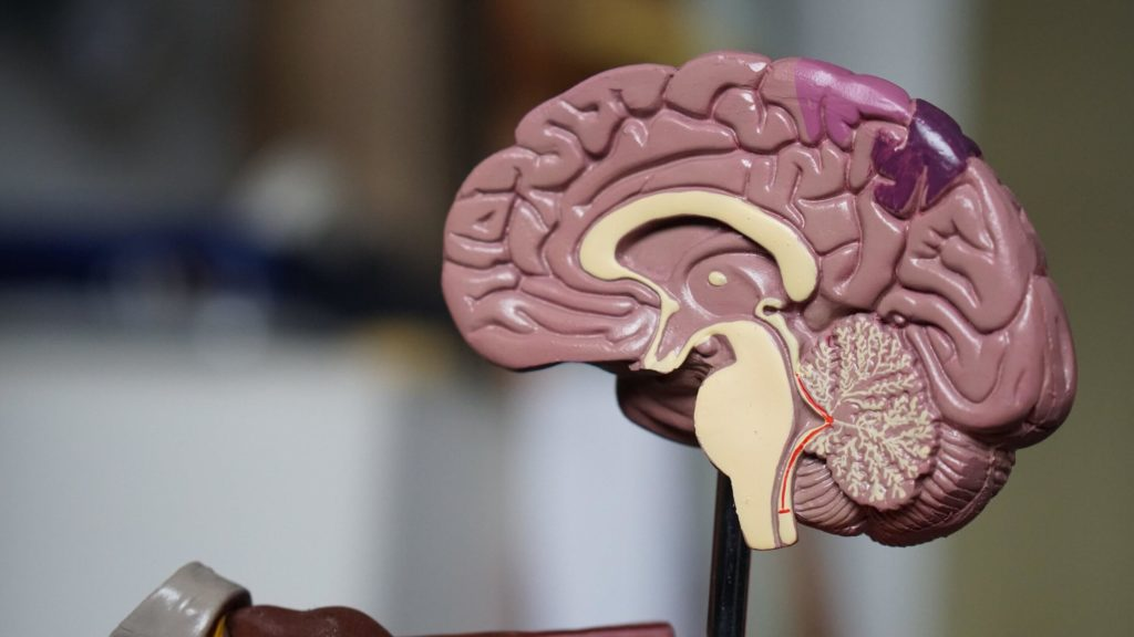 Human Brain Cancer- Possible Viable Treatment