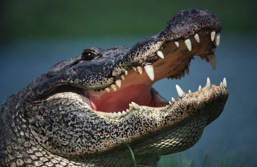 Alligator Attack Birthday Party