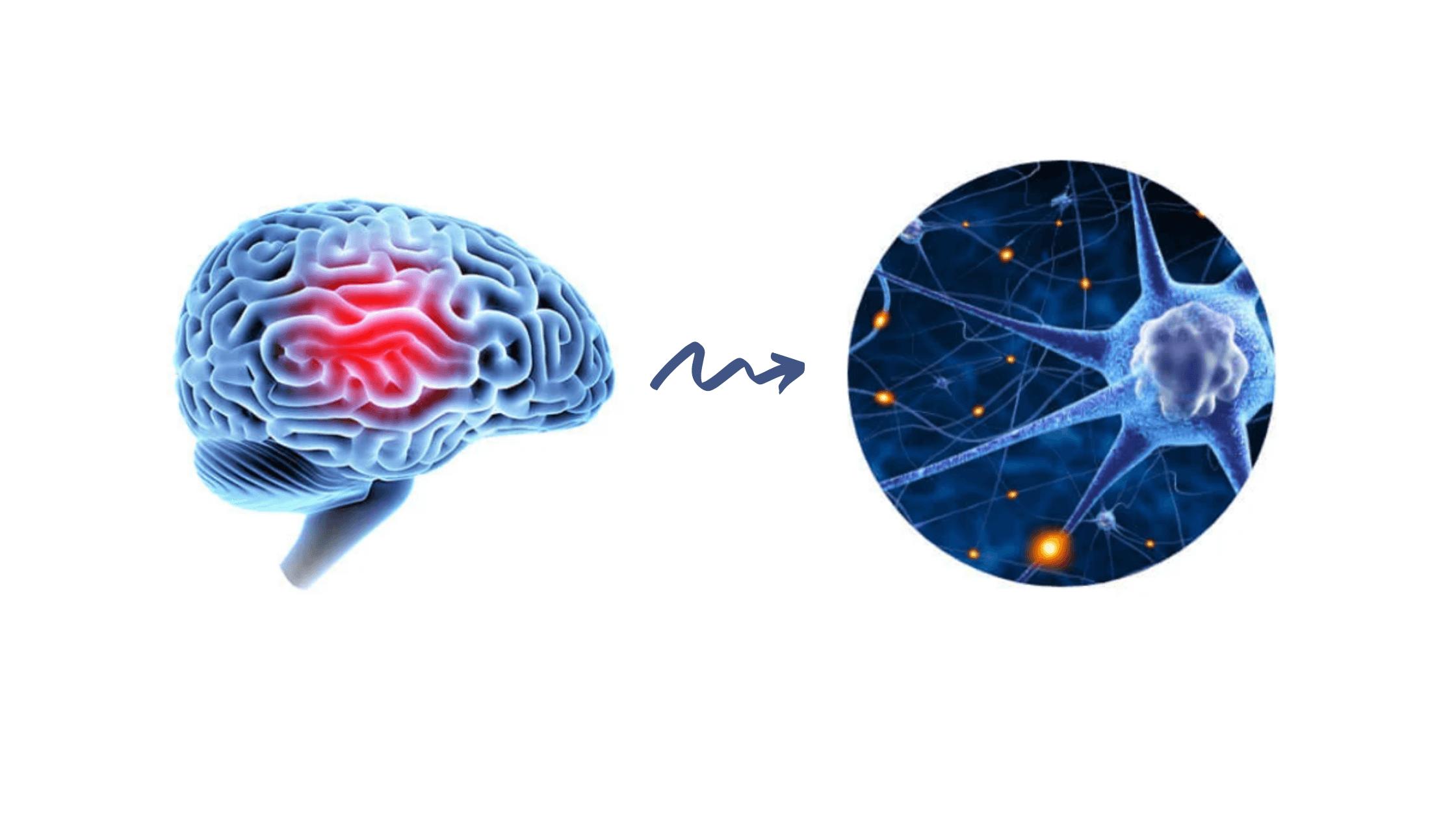 Advanced Memory Formula Benefits