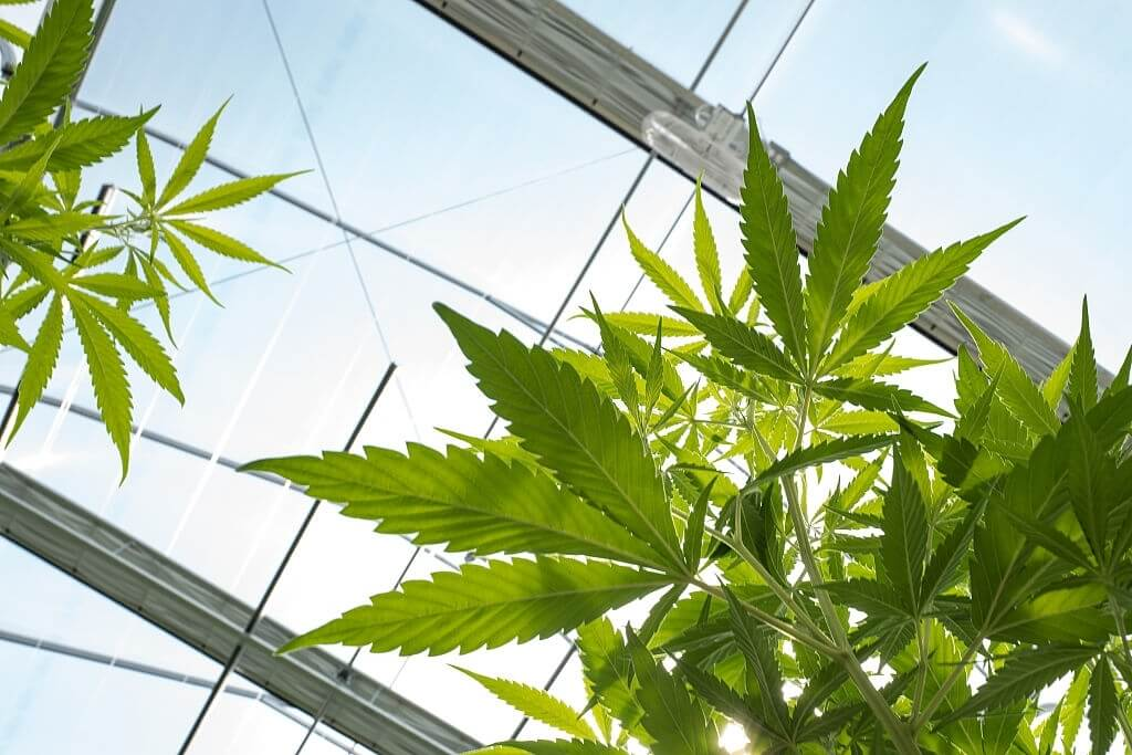 Cannabis Legalization Jeopardizes The Cleanliness Of Indoor Air And Public Health