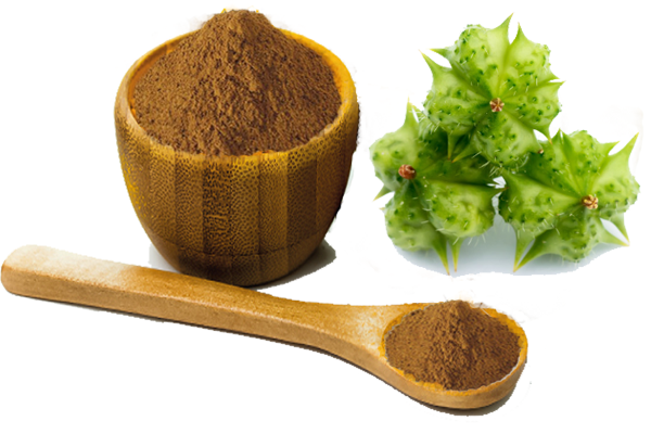 Health Flow Male Enhancement Ingredient-Tribulus Terrestris Fruit Extract
